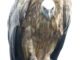 HoenderdaalBird